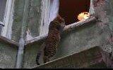 2008 sokaklar hayvanlarla güzel - fotoğraf yarışma