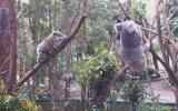 Oliver Heldens - Koala (Official Video) view on izlesene.com tube online.