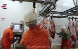 Cemsan Kelle Ciğer Konveyörü (slaughterhouse Systems - Mezbahane Sistemleri) view on izlesene.com tube online.