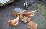 Mühendislik Harikası - Tavuk Yemliği