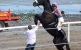 Yarış Atı Bir Anda Çılgına Döndü