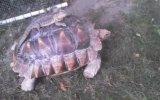 Mafya Ejder ve Kaplumbağa ile Gezintisi