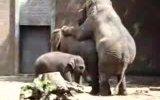 fillerin çiftleşmesi
