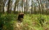 Beavers Fragmanı