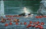 Das Zweite Wunder Von Loch Ness Fragman
